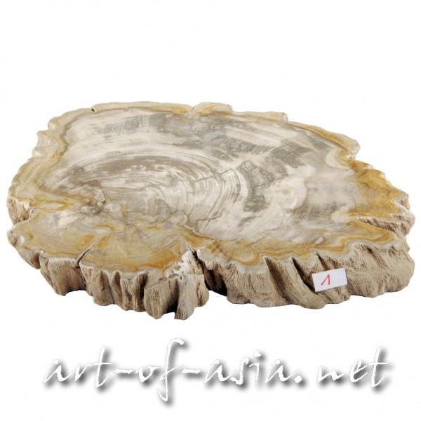 Bild 2 - Scheibe, 028x21cm, versteinertes Holz, beidseitig poliert, 2.35kg, No. 1