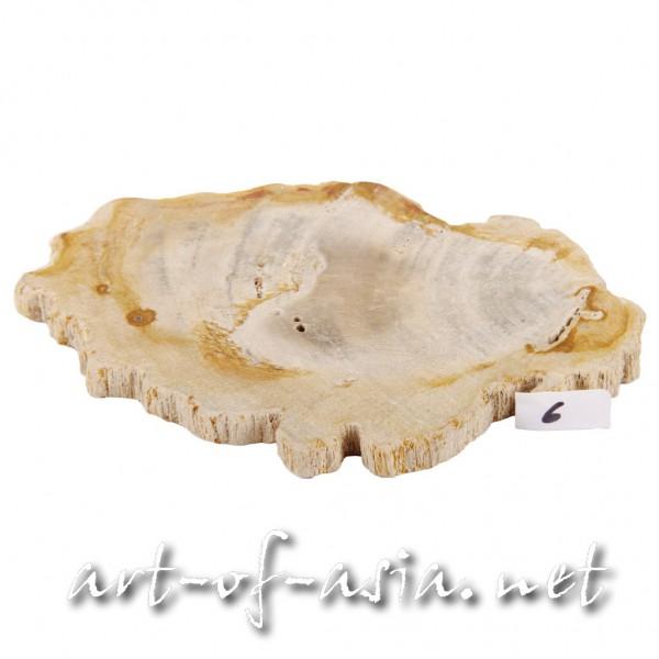 Bild 2 - Scheibe / Untersetzer, 015cm, versteinertes Holz, beidseitig poliert, No. 06