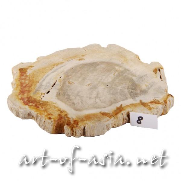 Bild 2 - Scheibe / Untersetzer, 015cm, versteinertes Holz, beidseitig poliert, No. 08